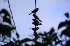 Oiseaux sur la ligne Image libre de droits