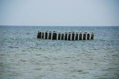 Oiseaux sur la mer Photo libre de droits