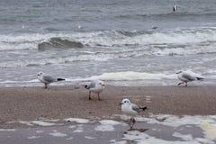 Oiseaux sur la mer images libres de droits