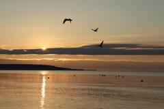 Oiseaux sur la mer photographie stock