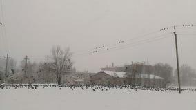 Oiseaux sur la neige Images libres de droits