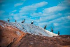 Oiseaux sur la roche Image libre de droits