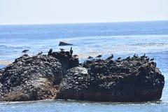 Oiseaux sur la roche dans l'océan Photo libre de droits