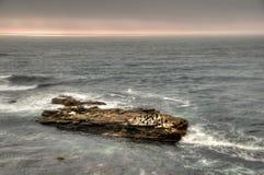 Oiseaux sur la roche-II images stock