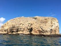 Oiseaux sur la roche San Cristobal Island Photos libres de droits