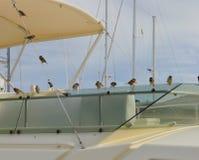 Oiseaux sur le bateau Image libre de droits