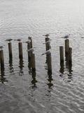 Oiseaux sur le bois photographie stock libre de droits