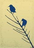 Oiseaux sur le branchement Photos libres de droits