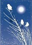 Oiseaux sur le branchement la nuit avec la lune Photos stock