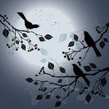 Oiseaux sur le branchement pendant la nuit d'été illustration de vecteur