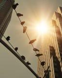Oiseaux sur le câblage téléphonique dans la ville avec le soleil Photographie stock libre de droits