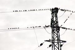 Oiseaux sur le fil Photos libres de droits
