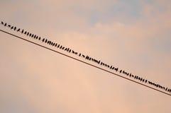 Oiseaux sur le fil Photos stock