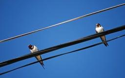 Oiseaux sur le fil Images stock