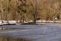 Oiseaux sur le lac glacé - Frances image stock