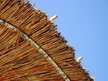 Oiseaux sur le parapluie Images libres de droits