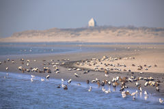 Oiseaux sur le rivage de Rottumerplaat Images stock