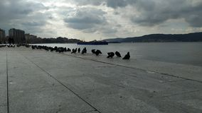Oiseaux sur le rivage et coucher du soleil au-dessus des Dardanelles photographie stock