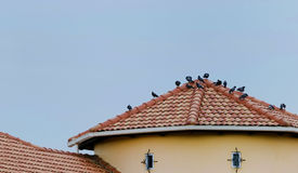 Oiseaux sur le toit Image stock