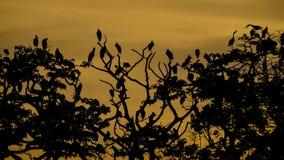 Oiseaux sur les arbres Photo libre de droits