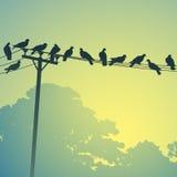 Oiseaux sur lignes illustration libre de droits