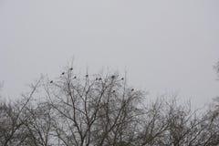 Oiseaux sur un arbre Photographie stock libre de droits