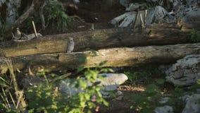 Oiseaux sur un arbre cassé banque de vidéos