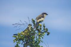 Oiseaux sur un arbre repéré dans la région sauvage photographie stock libre de droits