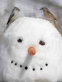 Oiseaux sur un bonhomme de neige Image stock