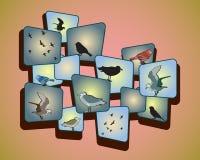 Oiseaux sur un fond mignon Illustration de Vecteur