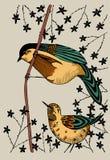 2 oiseaux sur une branche Image libre de droits