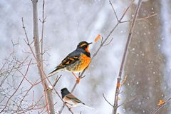 Oiseaux sur une branche Photographie stock libre de droits