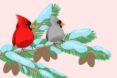 Oiseaux sur une branche d'arbre Photo stock