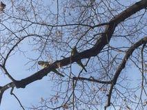 Oiseaux sur une branche d'arbre Images stock