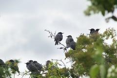 Oiseaux sur une branche d'arbre au printemps Photographie stock