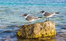 Oiseaux tranquilles en plage de bébé, Aruba Photographie stock libre de droits