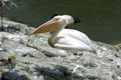 Oiseaux tropicaux Photos libres de droits