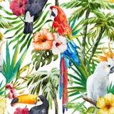 Oiseaux tropicaux illustration libre de droits