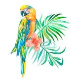 Oiseaux tropicaux d'isolement sur le fond blanc macaws Art Photo stock