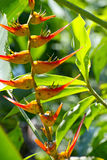 Oiseaux tropicaux des fleurs de paradis Photographie stock libre de droits