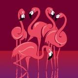 Oiseaux tropicaux roses de flamant dans l'eau Photos stock