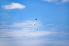Oiseaux volant au ciel bleu Santa Elena Ecuador Photos libres de droits