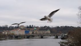 Oiseaux volant au-dessus de la ville de Prague Photo stock