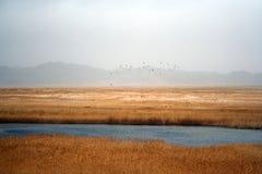 Oiseaux volant au-dessus du marais des montagnes Images stock