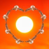 Oiseaux volant comme forme de coeur au coucher du soleil Images libres de droits