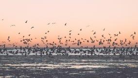 Oiseaux volant dans le coucher du soleil au-dessus de la mer congelée - rétro effet de vintage Photographie stock