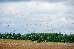 Oiseaux volant loin Photographie stock libre de droits