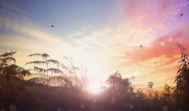 Oiseaux volant sur le fond de lever de soleil de pré Images stock