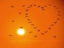 Oiseaux volants de volée contre le coucher du soleil.