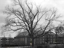oisolerad gammal tree Royaltyfria Foton